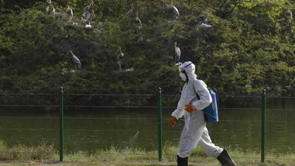 File photo: Workers spray to sanitize the area in front of bird enclosure.