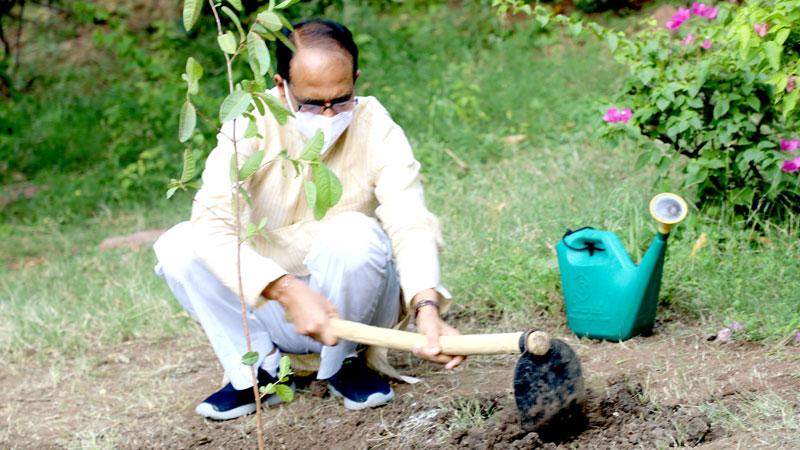 मुख्यमंत्री श्री चौहान ने आज अमरूद का पौधा लगाया